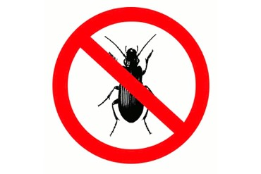 Pest Control Information